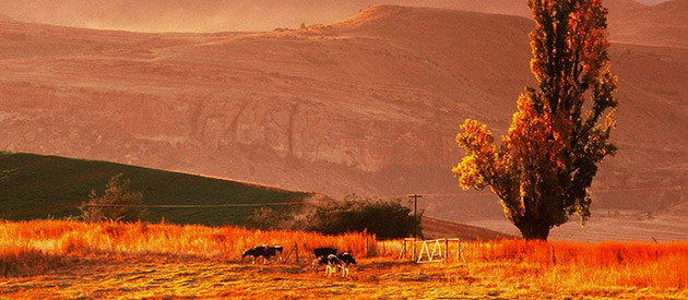 Lesoba Guest Farm - Fouriesburg accommodation - Free State